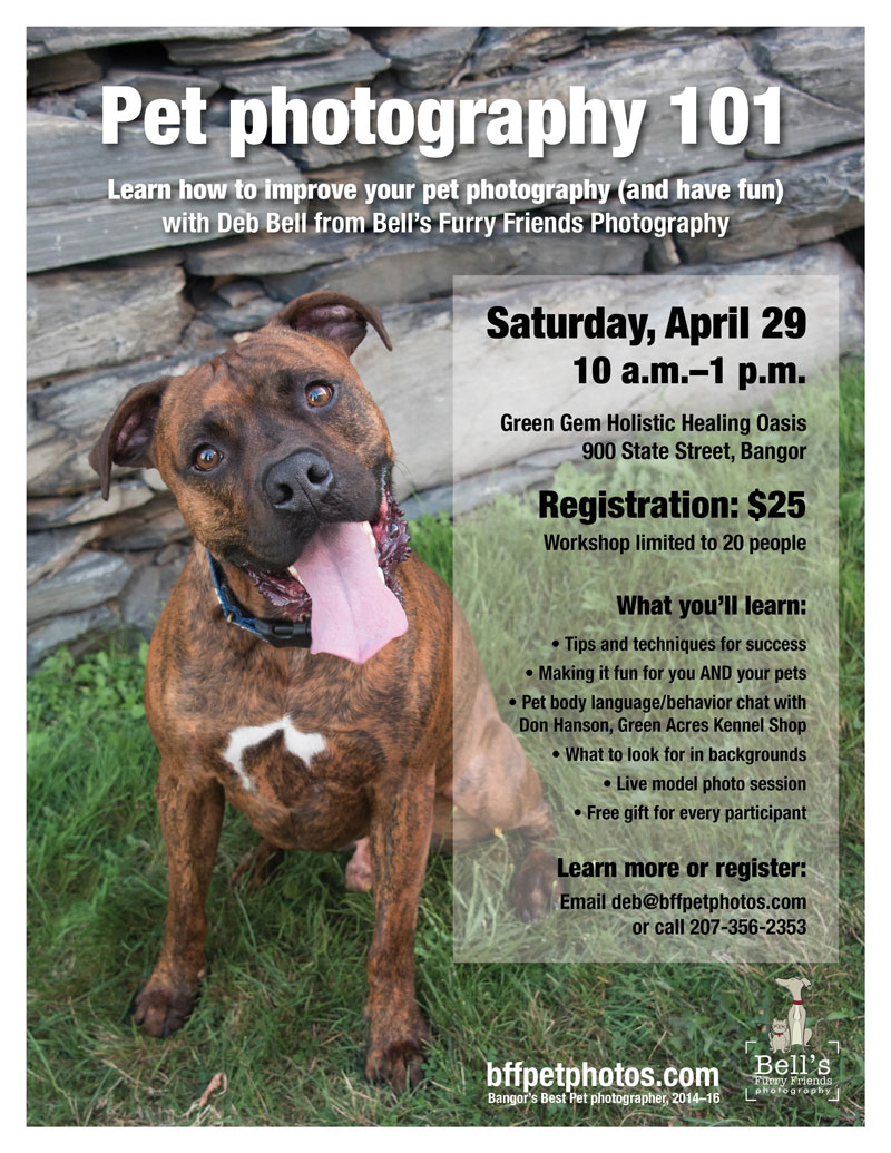 Pet-photography-101-flier
